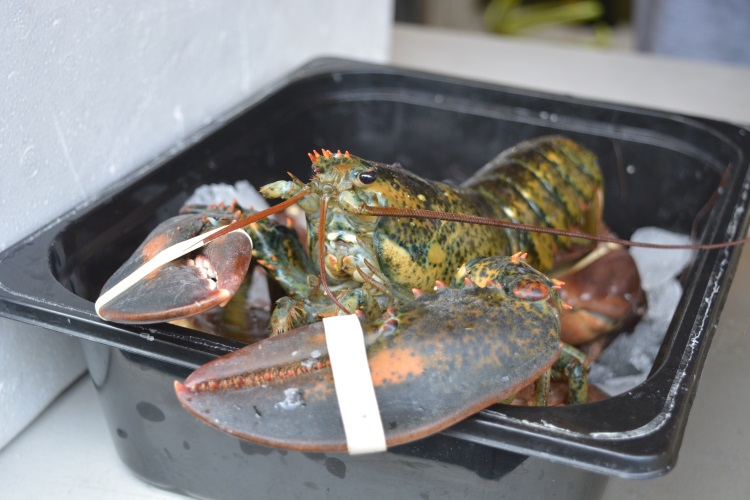 Larry the Lobster was ready to be a Christmas centrepiece as he was so delicious